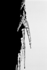 The divide (H-Alien) Tags: icicles abstract nature bw pentax me super film kodak trix
