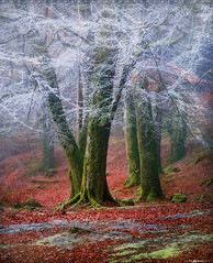 Into the Mystic #10 (Matt Anderson Photography) Tags: 2017 landscape mattandersonphotography scotland uk unitedkingdom hoarfrost magical color nopeople river garry loch oich invergarry december winter lush nature frost frosted fragility ethereal woodland tree outdoors paranormal mystery fantasy tranquilscene fog sunrisedawn coldtemperature scenics traveldestinations autumn idyllic meadow ephemeral emergence majestic ruralscene beautyinnature beechtree moss root perthshire theend madison wisconsin usa