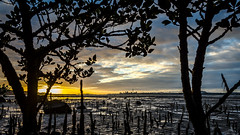 Sunrise over Auckland (Kathrin & Stefan) Tags: auckland centralbusinessdistrict skytower waitemataharbour beach city cloud harbour lowtide mangrove morning mud nature ocean outdoor plant rock silhouette sky skyline sunrise tree aucklandwaitakere northisland newzealand