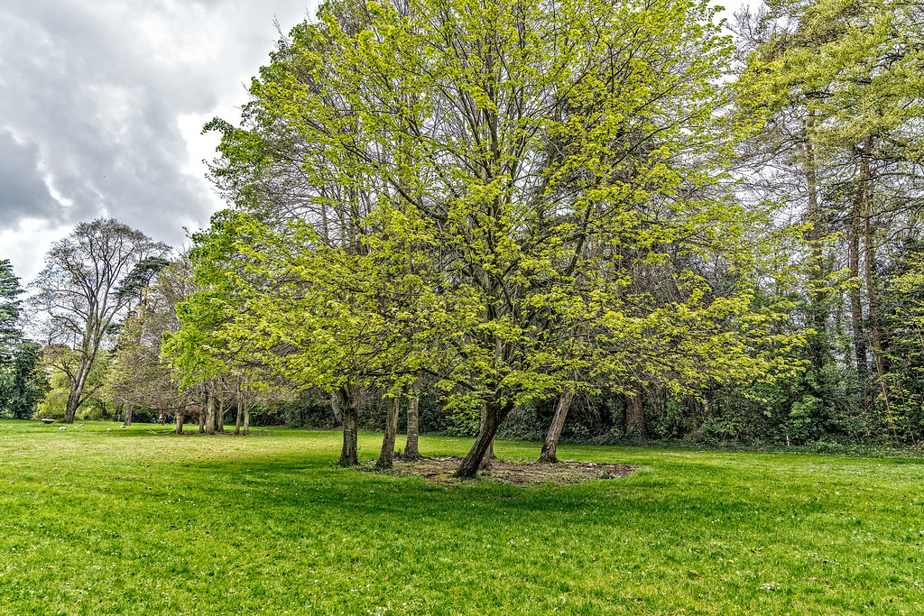 FARMLEIGH HOUSE [ GROUNDS AND GARDENS PHOTOGRAPHED APRIL 2017]-127211