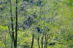 SPRING SKETCHBOOK (shmc5hamer) Tags: spring colour
