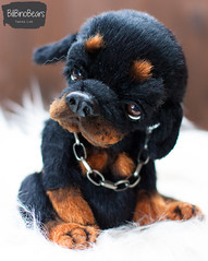 Rambo (Yanina Link) Tags: realistic rottweiler rottie doll dog artwork art artistteddy animals puppy pets germany teddy toys teddybear artist artistteddybear artistdoll artistbear bilibinobears yaninalink yaninalinkbears softsculpture stuffedtoy