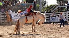 P3110142 (David W. Burrows) Tags: cowboys cowgirls horses cattle bullriding saddlebronc cowboy boots ranch florida ranching children girls boys hats clown bullfighters bullfighting