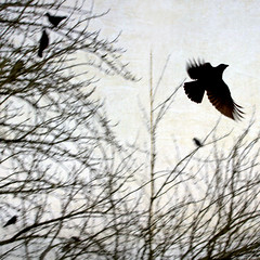 never your bird (1crzqbn) Tags: depthoffield birds sliderssunday 1crzqbn naturaleza