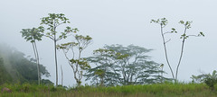 foggy landscape (still very busy, trying to catch up) Tags: fog foggy trees travel costarica outside outdoor ivodedecker