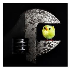 One False Move - Macro Mondays - Crime (RonnieLMills) Tags: hmm macro mondays crime fluffy chick adjustable spanner