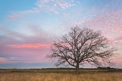 Tree's enjoying sunset. (BadGunman) Tags: arbre outdoor pyrenneesorientales perpignan canon france life colors light cloudy clouds sunset a6000 sony kenya wildlife nature tree