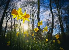 Sefton Park in Spring (Maggie's Camera) Tags: spring seftonpark liverpool march2017 merseyside