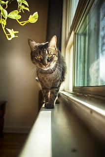 Watcher of the Window **Explored**