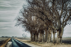 Oak Trees Lining A Lonely Road (myoldpostcards) Tags: rural country landscape oak trees rahman street st road rd menardcounty centralillinois illinois il unitedstates myoldpostcards randy randall vonliski season winter sky clouds atmosphere day contrast shadows oaktreesliningalonelyroad canon eos 7dmarkii