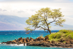 Because of You (Thomas Hawk) Tags: hawaii maui wailea tree fav10 fav25 fav50