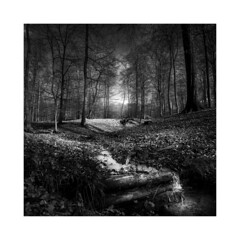 Luerwald #2 (Nordtegn) Tags: wald forest forêt bois buchen beeches bûches wood bach brook creek ruisseau baum bäume arbres arbre tree trees outdoor fotorahmen einfarbig landschaft landscape paysage nb noir noiretblanc blanc bw black blackandwhite blackwhite white zwartwit zwart zw wit sw schwarz schwarzweis schwarzweiss weis weiss mono monochrom monochrome monochromatic canon5dmkiii canon1635mmf28ii canon