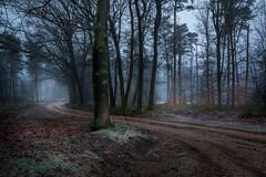 Path through the forrest (Mario Visser) Tags: forrest path ginkel gelderland netherlands trees mist morning