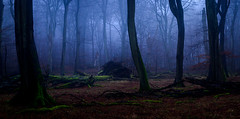 Rügen-65 (FlorianNessler) Tags: rügen ruegen ostsee buchenwald buchen beech jasmund nationalpark foggy fog nebel