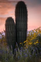 20170320-DSC_4954-Edit (lilnjn) Tags: arizona landscape southwestunitedstates travel unitedstates sky sunrise whitetank