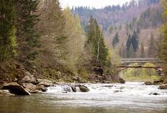 DSC08748 (igor_shumega) Tags: природа пейзаж горы говерла лес вода весна водопад