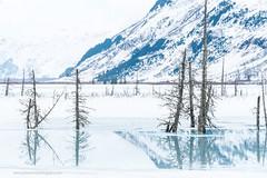 (Jackammo Photography) Tags: girdwood 1964earthquake ghosttrees deadtrees reflection landscape alaska portage turnagainarm