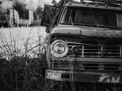 (Mr. Tailwagger) Tags: leica m240 tailwagger summilux 75mm junkyard rust dodge truck