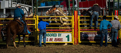 Misbehaving_DSC5490 (Mel Gray) Tags: dungogrodeo dungogrodeo2017 dungog newcastle hunterregion annualevent eastersaturday melgrayphotography cowboys cowgirls equestrianevents