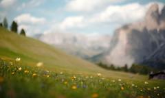 a watercolor by pancolar 55 / 1,4 (dapalmerpeter (slow & low)) Tags: dapalmerpeter spring dolomites alps bokeh pancolar 55 blur watercolor meadow watwercolours