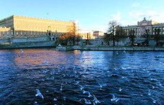 Stockholm's royal palace (nlopez42) Tags: stockholm royalpalace colorful harbour seagull sea parliament helgeandsholmen birds