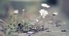 Le vie che portano all'essenza... (Cammino & Vivo Capovolto ☆ Claudio ☆) Tags: bokeh claudiol canon sfocato strada fiori road camminata natura walking sabato mare sea luci light sogno sogni dreams