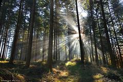 Lights & Shadows (Hector Prada) Tags: bosque luz sol niebla rayos arboles verde naturaleza forest sun light sunbeams fog mist magic trees green nature sunny paisvasco basquecountry