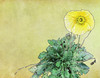Yellow Poppy (after Dürer) (bethrosengard) Tags: bethrosengard photomanipulation digitallyenhanced photoart digitalmagic digitalart