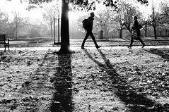 Morning Walk (Explored) (AdeRussell) Tags: shadows silhouettes bruntsfield bw travel scotland edinburgh unitedkingdom gb