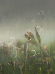 Wild flower meadow (Peter MacCallum-Stewart) Tags: wildflowers meadows grasses doubleexposure