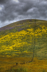 Marching To The Sky (Jeffrey Sullivan) Tags: carrizo plain national monument spring wildflowers santa margherita california usa canon eos 6d photo copyright 2017 jeffsullivan allrightsreserved april blm conservation lands bureauoflandmanagement followthebloom photomatixpro 6 beta enhanced hdr clouds weather stormy