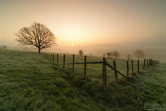 Stavelot sunrise (Mojekieke) Tags: mojekieke benwillemsen fotografiemojekiekenl sunrise nature mist stavelot belgium goldenlight gold goldenhour tree lonesome
