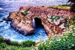 Shelter from the sea (R*Pacoma) Tags: lajolla sandiego california sea cave ocean water rocks cliffs flowers plants flora seascape landscape