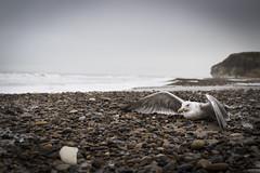 Waiting...... (sandterne) Tags: bulbjerg død familie fugle helios mennesker billedsprog