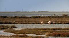 2315  Delta del Ebro, Tarragona (Ricard Gabarrús) Tags: agua mar delta ebro water ave aves animal animales natura naturaleza airelibre paseo parque park ricardgabarrus paisaje olympus ricgaba