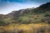 20170409-DSC_5271 (lilnjn) Tags: arizona southwestunitedstates travel unitedstates whitetank