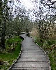 Marsh Boardwalk (chdphd) Tags: boardwalk lochofkinnordy kinnordyloch loch kinnordy rspb
