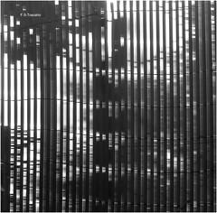 Valla abstracta. Abstract fence. (Esetoscano) Tags: valla verja fence paralelísmo parallelism geometría geometry abstracto abstract bw bn byn monocromo monochrome solysombra sunandshadow