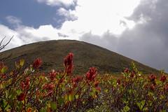 (simonturkas) Tags: lanzarote canaryislands explore adventure travel islascanarias latitudeoflife latituddevida wanderlust excursion panasonic lumix landscape