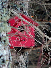 Birds Love Nest (Athanasia_Houvarda) Tags: red home wood birds tress branches outdoor nature love canada
