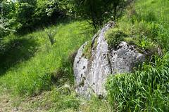 DSC_2606 (oria77) Tags: dolina bolechowicka krakow valley woodland poland