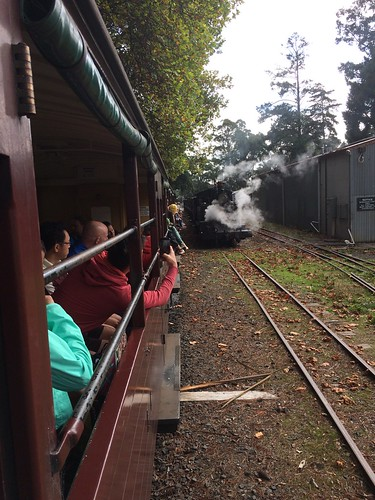 Toot! Toot! — at Puffing Billy's Great Train Race.