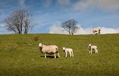 1920p 72dpi-7140 (reach.richardgibbens) Tags: bowland lancashire england uk littledale fell moorland moor valley dale