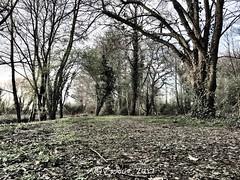 Le chemin...#bretagne #paysage #arbres #nature #chemin #a#bzh #breizh #lens #lumière #ombre (lucrabco) Tags: bretagne paysage arbres nature chemin bzh breizh lens lumière ombre