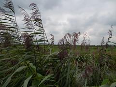 2009-08-25-0002.jpg (Fotorob) Tags: water nederland polder utrecht holland netherlands niederlande breukelen