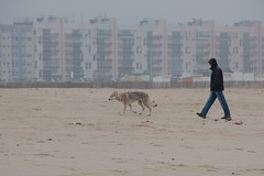 EOS7D_2013_05_20_006358 (Olivier_1954) Tags: dog chien beach shepherd plage calais berger wissant escales