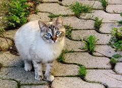 plus de croquettes ? (b.four) Tags: chat cat gatto alpesmaritimes rubyphotographer coth mygearandme mygearandmepremium mygearandmebronze ruby3 ruby10 ruby15 ruby20