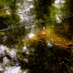 Trees In Water 010 (noahbw) Tags: trees sunlight abstract blur reflection water leaves forest square spring woods nikon dof natural explored d5000 noahbw