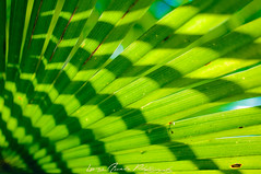parc du chteau_retouches-10 (L.Amely Photography) Tags: nature up close lumire vert ombre palmier feuille graphisme