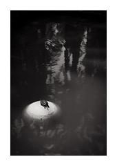 Bain de soleil. (Scubaba) Tags: soleil pierre reflet espagne tortue noirblanc elx elche